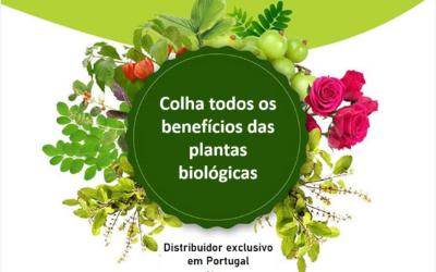 Colha os benefícios das plantas biológicas (vídeo)