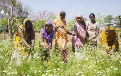 A Organic India e o empoderamento das mulheres